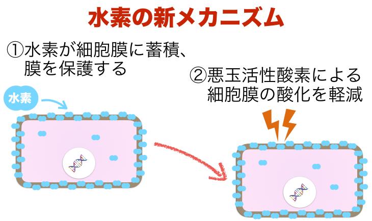 水素のメカニズム1