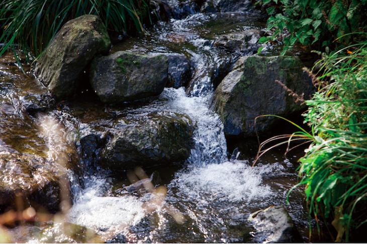工場の近くを流れる小川。透明度の高い清水がこんこんと流れる (写真提供:メディソル株式会社)